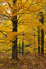 Lost in Yellow by Terry Thompson (Color Photograph)