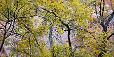 Autumn Dance by Terry Thompson (Color Photograph)