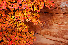 Autumn in Zion by Terry Thompson (Color Photograph)