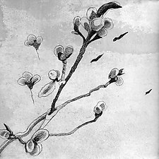 Winter Into Spring/Catkins by Meredith Nemirov (Ink Drawing)