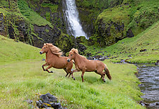 Two Horses at the Waterfall by Carol Walker (Color Photograph)
