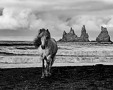 Icelandic Mare on a Stormy Beach by Carol Walker (Black & White Photography)