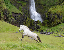 White Horse at the Waterfall by Carol Walker (Color Photograph)