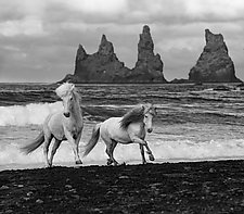 Two Horses Run at a Stormy Beach by Carol Walker (Black & White Photograph)