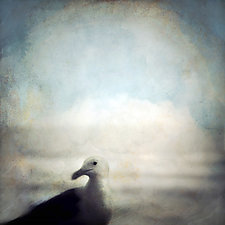 Resting Seagull by Gloria Feinstein (Color Photograph on Aluminum)