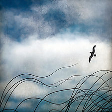 Seagrass and Seagull by Gloria Feinstein (Color Photograph on Aluminum)