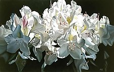 White Rhododendron by Barbara Buer (Giclee Print)