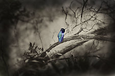 Bird by Lori Pond (Color Photograph)