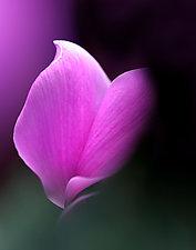 Zen by Katherine Morgan (Color Photograph)