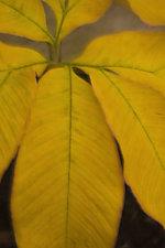 Golden Umbrella by Katherine Morgan (Color Photograph)