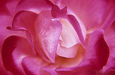 Heartfelt by Patricia Garbarini (Color Photograph)