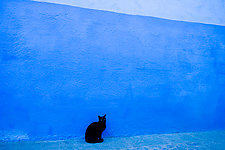 Black Cat, Blue Wall, Morocco by Jed Share (Color Photograph)