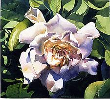 Gardenia by Marlies Merk Najaka (Giclee Print)