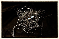 Eggs by Lori Pond (Color Photograph)