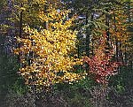 Fall Walking by Scott Zupanc (Giclee Print)