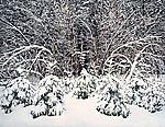 Ottawa Winter by Scott Zupanc (Giclée Print)