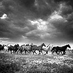 Remuda #6 by Adam Jahiel (Black & White Photograph)