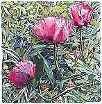 Poppies by Marlies Merk Najaka (Giclee Print)