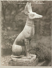 Egyptian Dog, 1992 by Mel Curtis (Black & White Photograph)