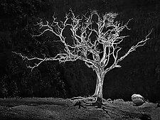 Burning Bush by Matt Anderson (Black & White Photograph)