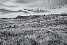 Tree & Sky - Eastern Wyoming by J.L. Rodman (Black & White Photograph)