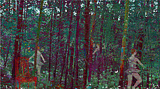 The Secret Forest by Mary Hatch (Pigment Print)