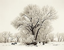 Winter, Bishop California by Joel Anderson (Black & White Photograph)