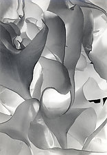 Double White In Black & White III by Raphael Sloane (Black & White Photograph)
