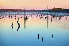 Quiet Sentries by Richard Speedy (Color Photograph)