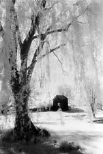 Weeping Willow and Barn by Elizabeth Holmes (Black & White Photograph)