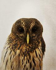 Healing Owl II by Yuko Ishii (Color Photograph)