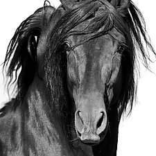El Caballo Negro by Carol Walker (Black & White Photograph)