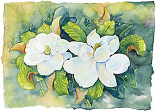 Magnolias by Cathy Locke (Giclee Print)