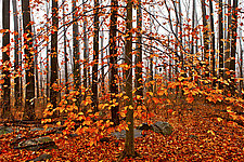 Catskill Fall by Richard Speedy (Color Photograph)