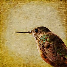 Song of a Calliope Hummingbird I by Yuko Ishii (Color Photograph)