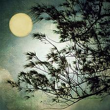 Full Moon by Gloria Feinstein (Color Photograph on Aluminum)