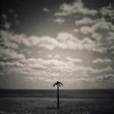 Palm Tree by Gloria Feinstein (Black & White Photograph on Aluminum)