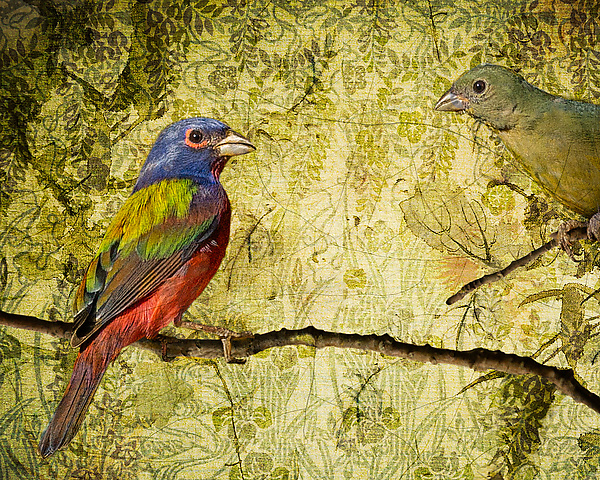 Vintage Painted Buntings