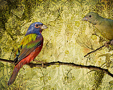 Vintage Painted Buntings by Melinda Moore (Color Photograph)
