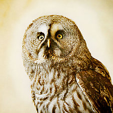Healing Owl VI by Yuko Ishii (Color Photograph)