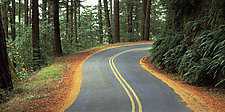 Mountain Road by Terry Thompson (Color Photograph)