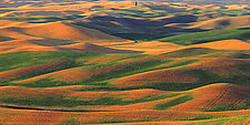 Rolling Wheat Fields at Sunset by Terry Thompson (Color Photograph)