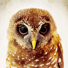 Owl Love I by Yuko Ishii (Color Photograph)