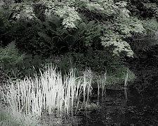 Maple Garden Pond number 1 by Steven Keller (Black & White Photograph)
