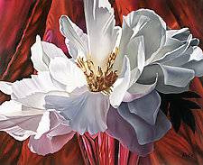 White Peony on Red by Barbara Buer (Giclee Print)