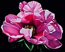 Pink Peony on Black by Barbara Buer (Oil Painting)