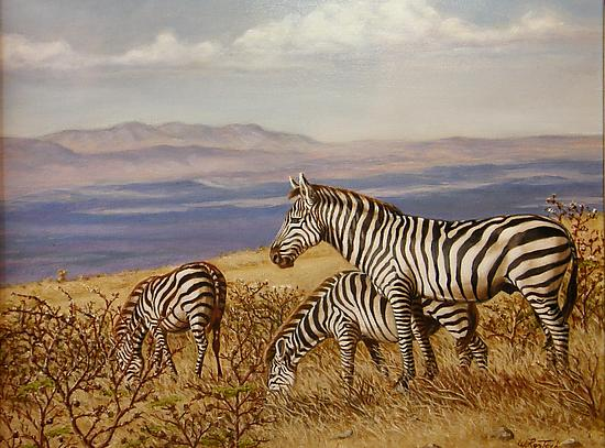 Zebras of Ngorongo