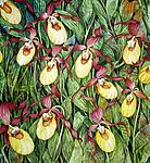 Yellow Lady Slipper Field by Helen Klebesadel (Watercolor Painting)