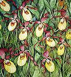 Yellow Lady Slipper Field by Helen Klebesadel (Giclee Print)