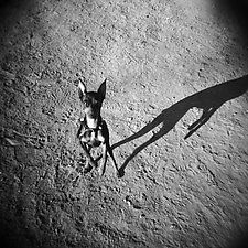 Nico on the Moon by Jenny Lynn (Black & White Photograph)